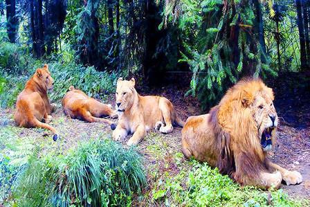 森林动物主题酒店